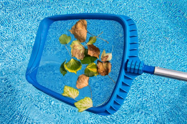 Cleaning leaves from the swimming pool